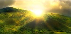 Spring-Rising-Sun